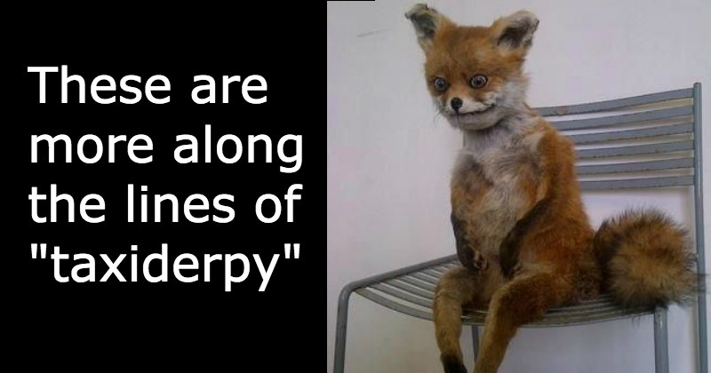 these are more along the lines of taxiderpy - cover image to a list of funny taxidermy fails