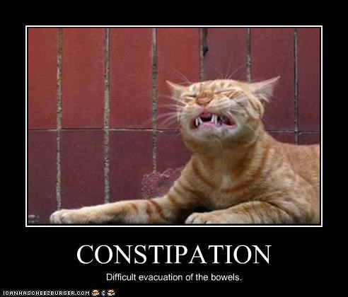 Constipation Cheezburger Funny Memes Funny Pictures