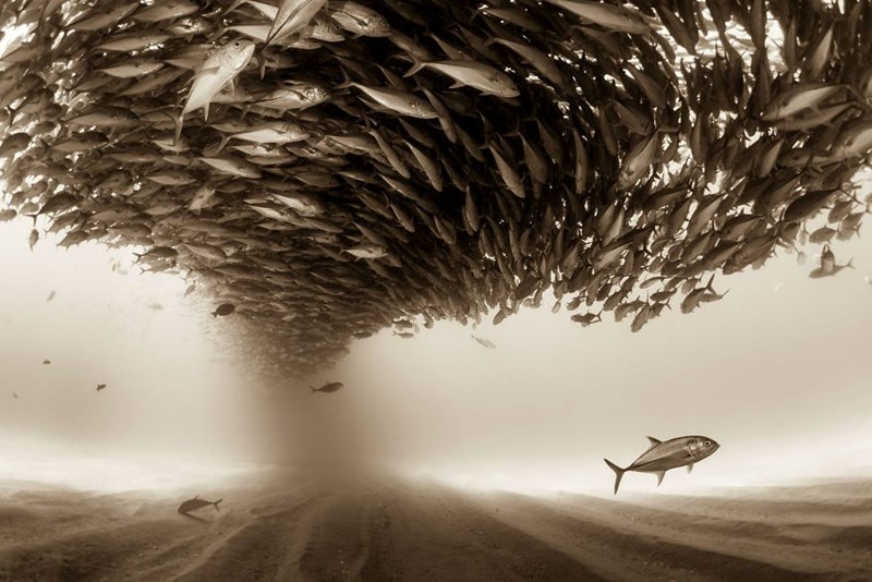 winner animals photos from Sony world photography awards