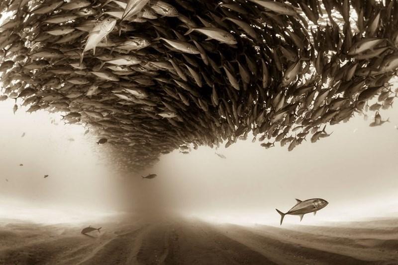winner animals photos from Sony world photography awards
