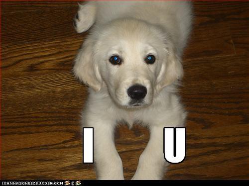 labrador,love