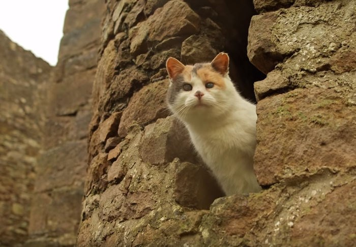 blind cat is living an adventurous life