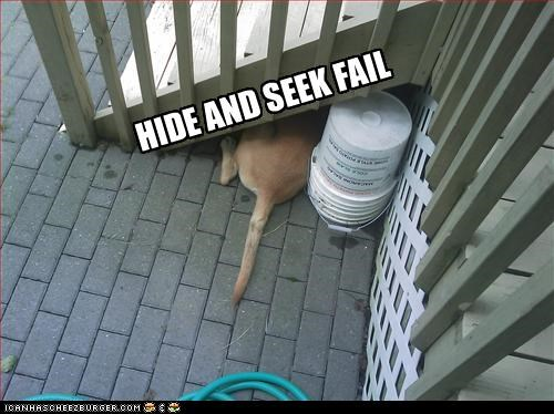 FAIL game hide and seek labrador playing