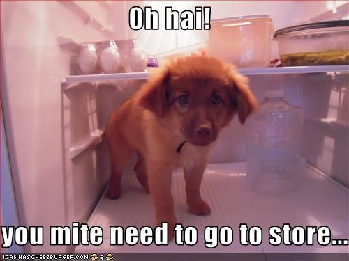 empty food fridge o hai puppy whatbreed - 2459705088