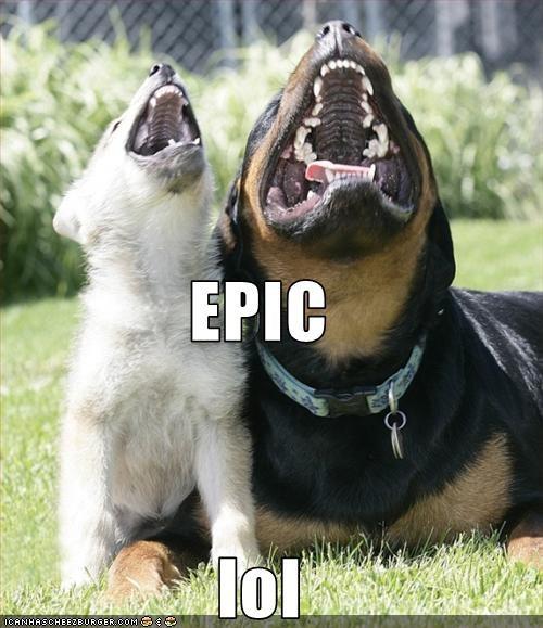friends laugh pomeranian rottweiler smile - 2461782272