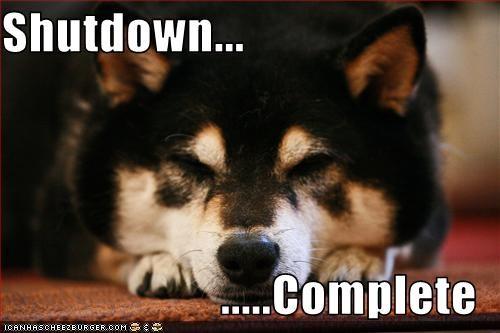 asleep complete computer shihtzu shutdown - 2464088832