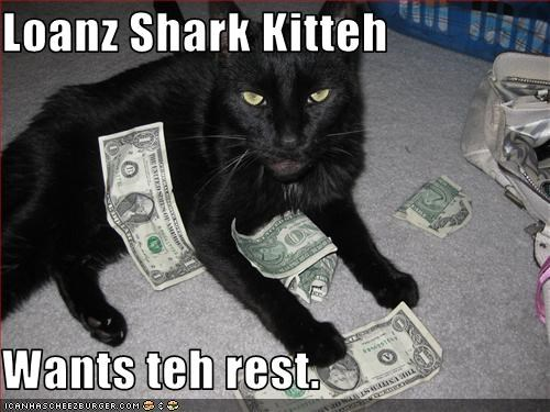 Loanz Shark Kitteh  Wants teh rest.