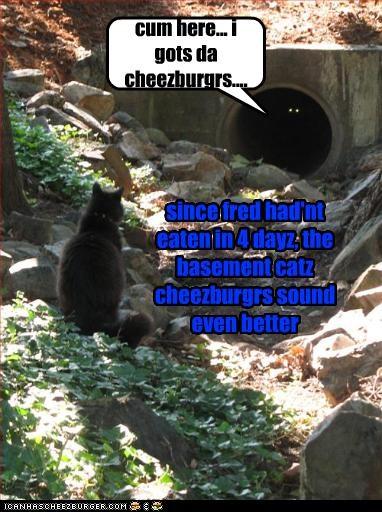 Cheezburger Image 2465414400