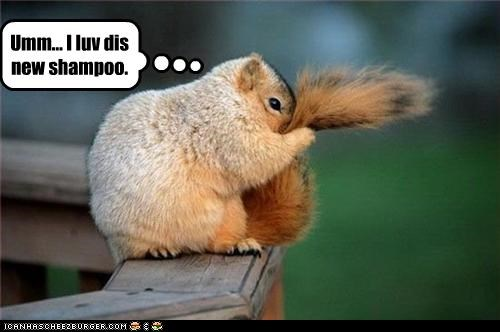 lolsquirrels shampoo want - 2465943808