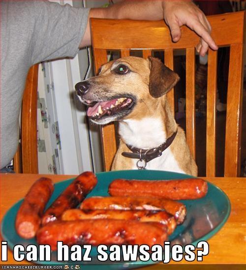 Cheezburger Image 2466887936
