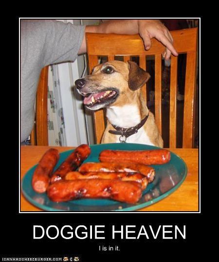 Cheezburger Image 2467019520