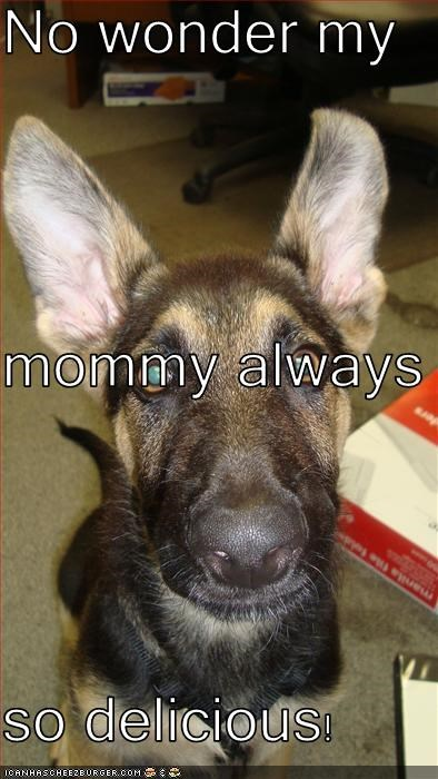 Cheezburger Image 2467159808