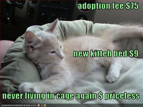 adopted cute kitten priceless - 2467741440