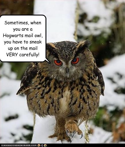 Sometimes When You Are A Hogwarts Mail Owl You Have To Sneak Up