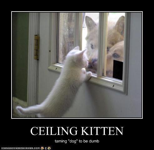 CEILING KITTEN