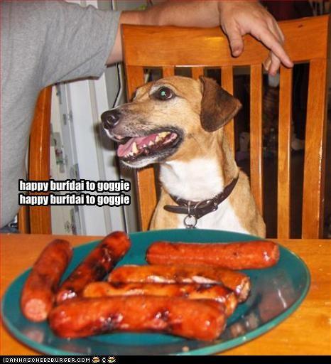 Cheezburger Image 2468116224