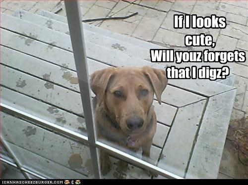 cute digging guilty mud paw sorry whatbreed - 2469518592