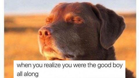 Collection of wholesome memes and comics, lots of dogs and animals.