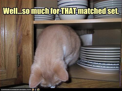 bad cat destruction kitchen mess - 2471188736