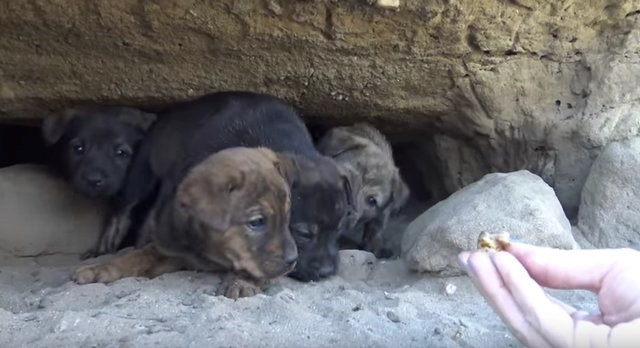 9 puppies were saved from a cave in a heroic rescue
