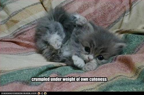 cute kitten oh noes - 2474484480