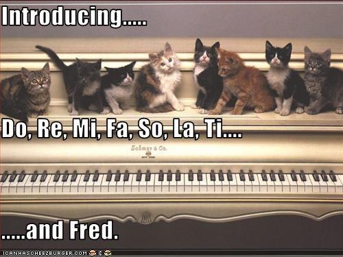 cute kitten piano - 2475208960