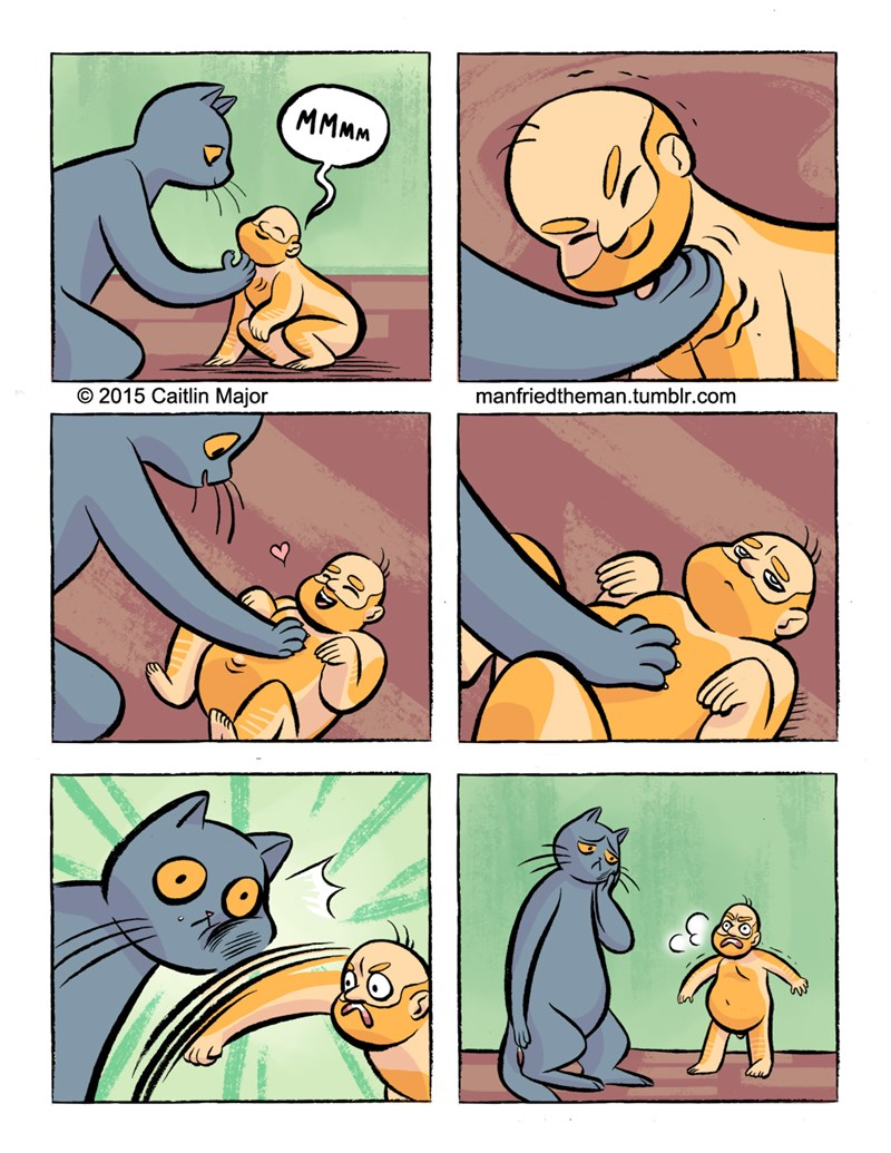 Web comics about Cats and Men switching rules