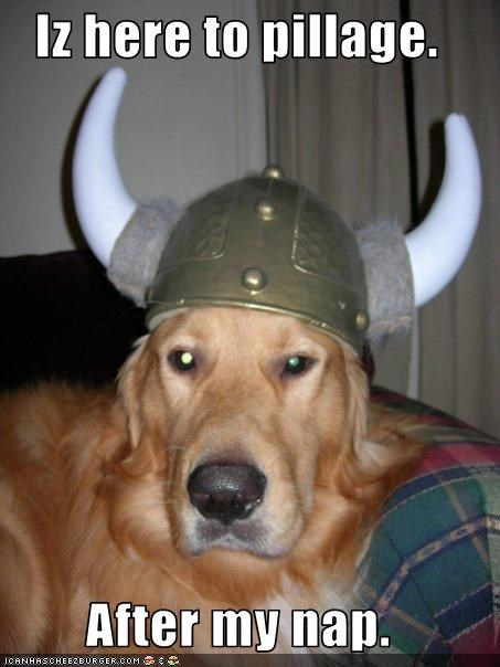 golden retriever,nap,tired,viking