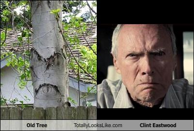 Clint Eastwood,fave,grumpy,old,trees