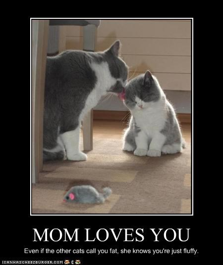 cute,Fluffy,lick,LOLs To Go,love,mom