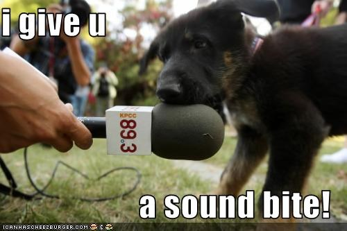 bite microphone puppy whatbreed - 2483139328