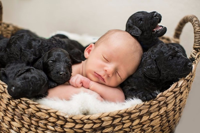 Newborn surrounded by 9 puppies in an adorable photo shoot series