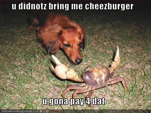 Cheezburger Image 2485502720