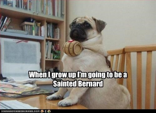 barrel grow up pug saint bernard
