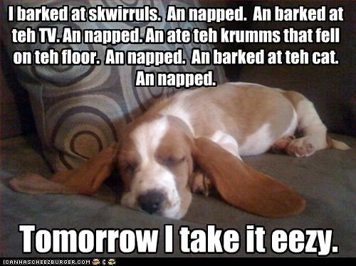 A basset's work is never done (or started) I barked at skwirruls. An napped. An barked at teh TV. An napped. An ate teh krumms that fell on teh floor. An napped. An barked at teh cat. An napped. Tomorrow I take it eezy.