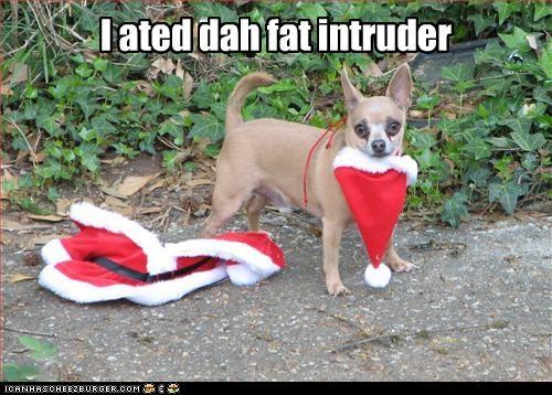 ate,chihuahua,fat,intruder,santa