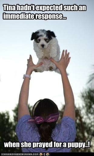 Tina hadn't expected such an immediate response... when she prayed for a puppy..!