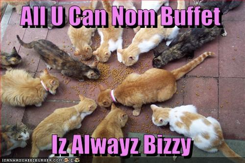 buffet cyoot kitteh of teh day food hungry kitten - 2490089728