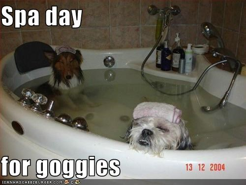 bath bathroom relax sheltie shihtzu spa tub - 2490276096