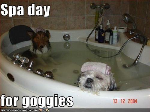 bath bathroom relax sheltie shihtzu spa tub - 2490276096
