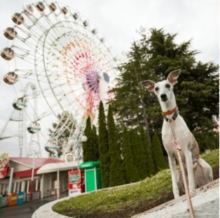 Amusement park in Japan allows visitors to bring dogs