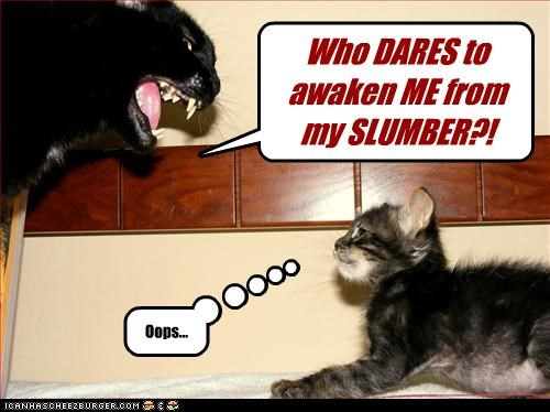 Who DARES to awaken ME from my SLUMBER?! Oops...