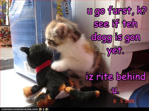 cute,dogs,kitten,scared,stuffed animals