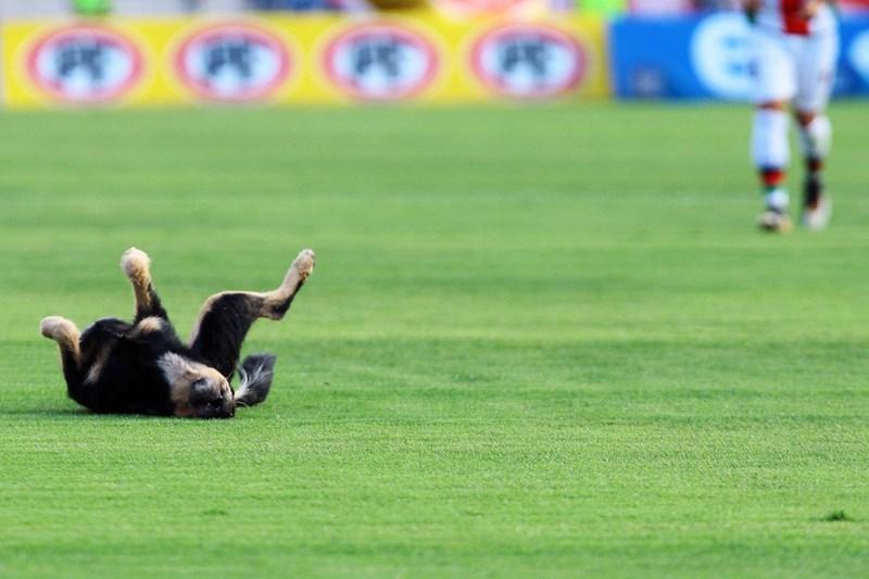 futbol fotos deportes animales perros curiosidades - 249349