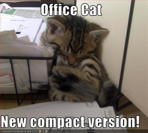 cute kitten nap Office work - 2493948672