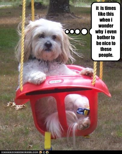 baby crazy humans nice shihtzu swing wonder