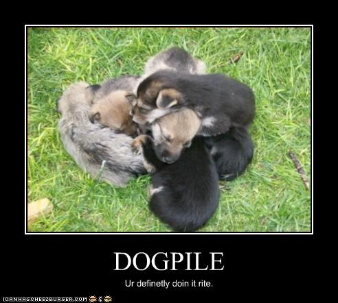 dogpile,doin it rite,puppies,whatbreed