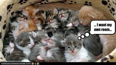 crowded cute kitten siblings squished - 2496164608