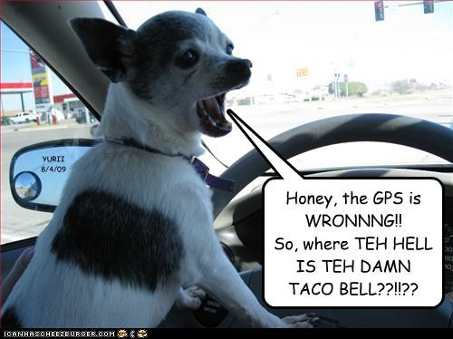 Honey, the GPS is WRONNNG!! So, where TEH HELL IS TEH DAMN TACO BELL??!!?? YURII 8/4/09