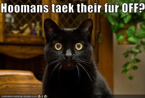 fur scared shocked - 2496484608